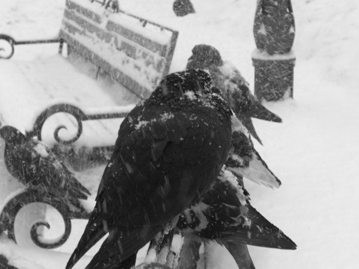 Сюжет картинки как мы помогаем зимующим птицам