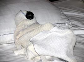 Купание белохохлого какаду Алохи проживающего в Аризоне