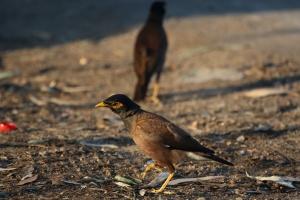 Дикие птицы Средиземного моря