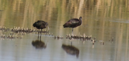 Птицы Краснодарского края в августе
