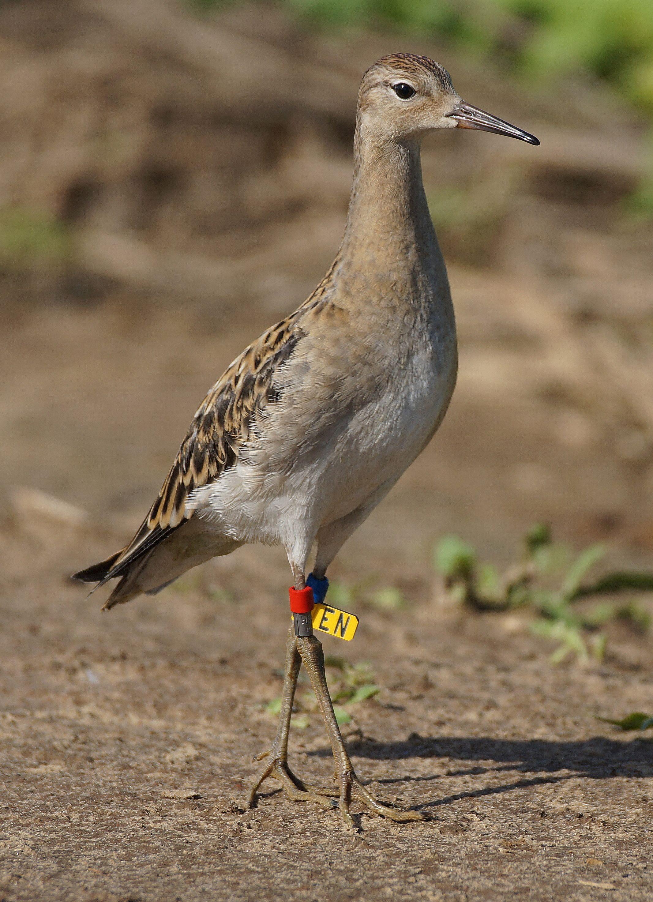 Легкое любителя птиц фото