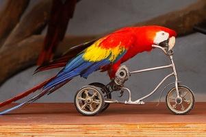 Как и чем кормить попугая? Советы по содержанию попугаев от врача-орнитолога.