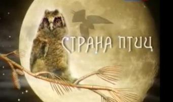 """Страна птиц"": Год цапли"