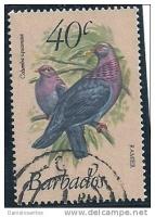 Лечение и спасение голубей в приюте