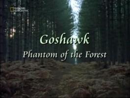 Ястреб тетеревятник: фантом леса / Goshawk Phantom of the Forest (2007г.)