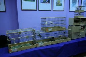 Выставка кенаров на Галерее