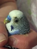 О чем говорят орнитологи -часть 2